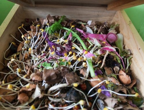 How I Compost At Home: Part II — Vermicomposting